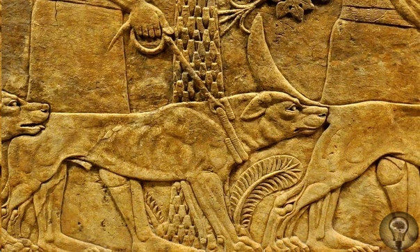 Боевые псы Давным-давно человек одомашнил серого волка, смешал с тибетским догом и использовал полученный результат в своём самом любимом деле - убийстве себе подобных. Военных собак натаскивали