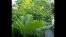 Особенности глубины посадки многолетних растений Каллы канны хосты пионы лилейники гибискусы травян