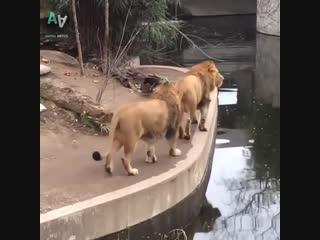Неуклюжие животные, прикольная подборка )