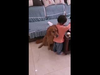 Дружба ребёнка и собаки: когда строгая мама ругает малышку, пёс защищает её.