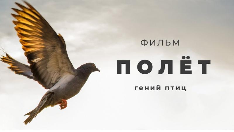 Мифы эволюции Фильм Полет гений птиц