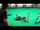 Шоу со змеями Змеиная ферма в Паттайе, Таиланд