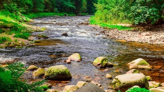 Sounds of Nature, Noise River and Forest Birds singing - 2 hours  Звуки природы, шум реки и пение лесных птиц - 2 часа