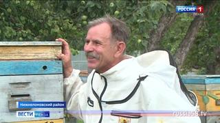 Пензенские пчеловоды рассказали, как собрать правильный мед