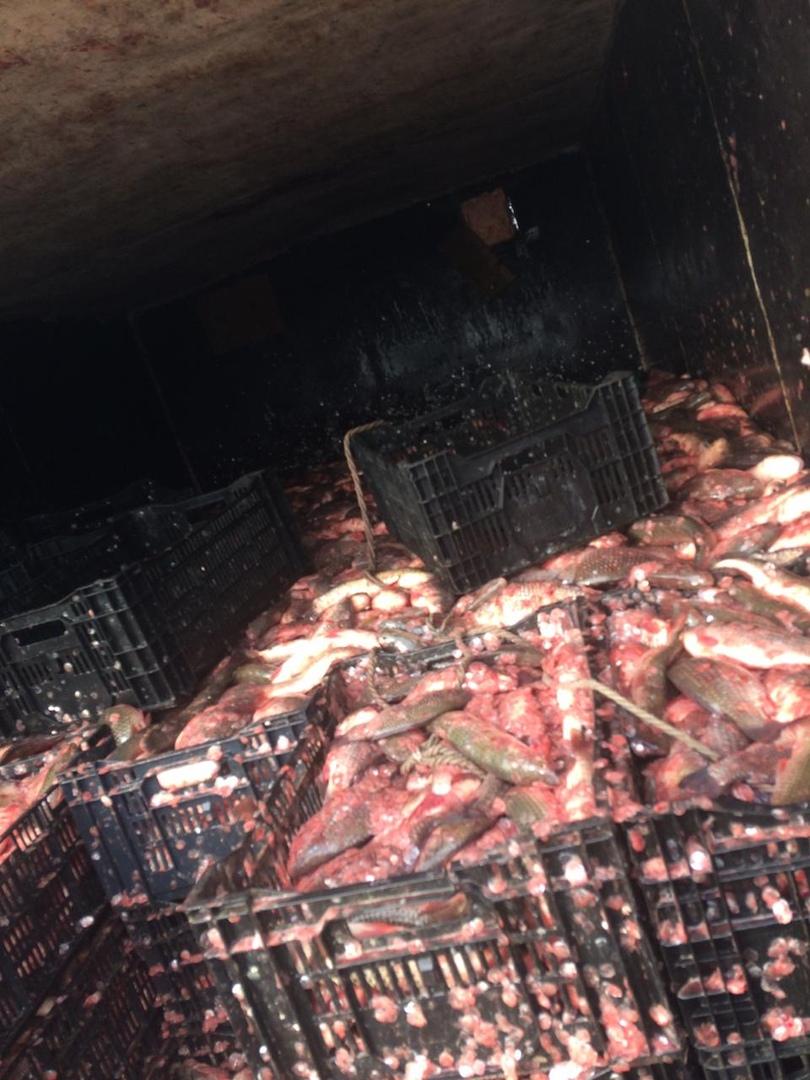 Под Таганрогом пограничники задержали браконьера с уловом на сумму более 3 000 000 рублей. ВИДЕО