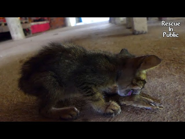 OMG! Very poor hungry kitten is eating bone fish head on the ground | Sadness starved animal