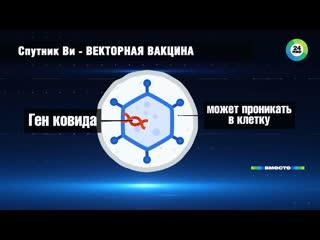 В России на этой неделе завершились клинические испытания второй вакцины от коронавируса