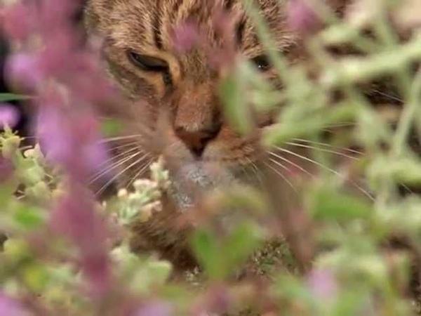 Эти загадочные животные BBC Weird Nature 6